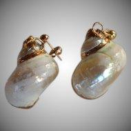 Gold plated Shell Dangle Earrings