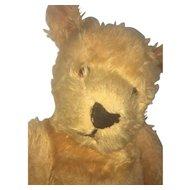 Barton Waugh 'Bruno' Australian 1950s Bear