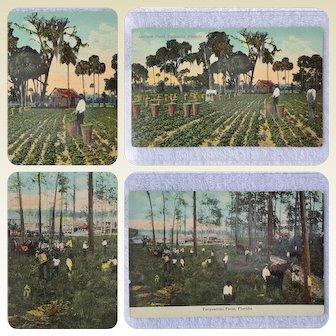 Lettuce Field & Turpentine Farm POSTCARDS ~ circa 1900 Black Americana Memorabilia