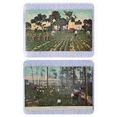 c.1900 Black Americana Memorabilia ~ Lettuce Field & Turpentine Farm POSTCARDS