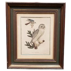 Circa 1830 Snow Owl/Male Sparrow Hawk Hand Colored Engraving by William Lizars