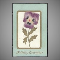 Birthday Greetings  Applied Flocked Pansy  Germany
