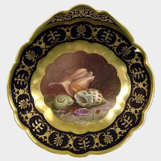 FBB Worcester Porcelain Dessert Dish, Shells by Thomas Baxter from an Extraordinary Service C1815 Fight Barr.
