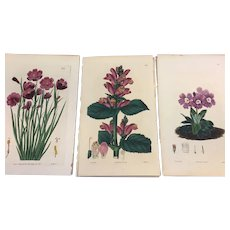 Botanicals, early to mid 19th century