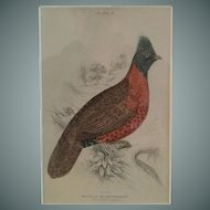 19th Century, Hand Colored, Bird,  Engraving,