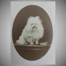 "Antique, ""Carte de Visite"", Dog,  French Cabinet Card"