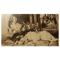 "Antique "" Carte de Visite "" Dogs,  Cabinet Card"