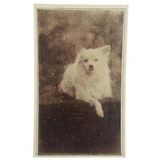 Carte de Visite ~  Dog ~ Cabinet Card
