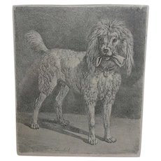 Antique Dog Etching.  Lovely Poodle.