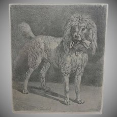 Antique Dog Etching.  Lovely Poodle.