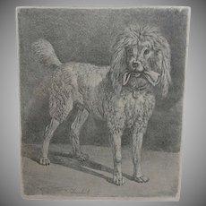 Antique, Poodle, Dog,  Etching