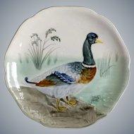 Vintage Mallard Duck, Majolica Plate