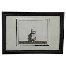19th Century,  Bichon, Dog, Etching