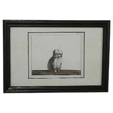 Le Bichon, Tinted Book Print, 19th Century Etching
