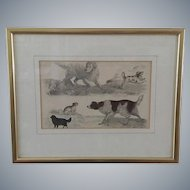 Antique Dog Engraving, Oliver Goldsmith