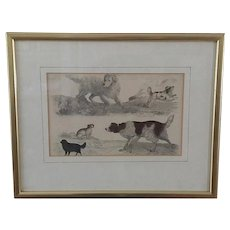Dog Engraving, Oliver Goldsmith ~ Collectable