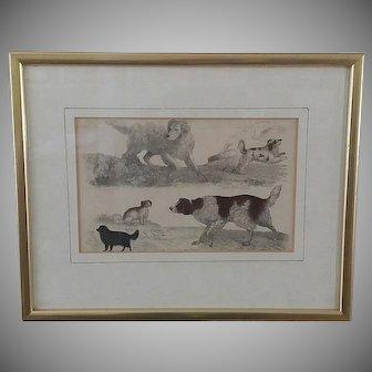 Antique Dog Engraving, Oliver Goldsmith