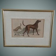 19th Century, Dog, Copper Engraving, Oliver Goldsmith