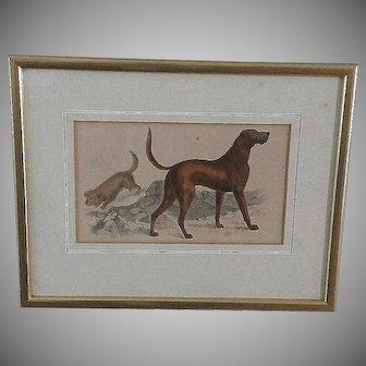 19th Century, Dog, Copper Engraving, Oliver Goldsmith