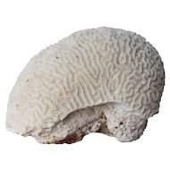 Large Vintage Marine Coral Specimen, Brain Coral