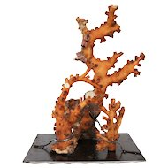 Large Vintage Marine Coral Specimen with iron stand