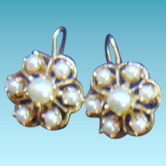 Elegant 14 kt gold Floral Shaped Ear rings