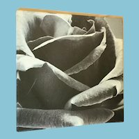 'Close Up of a Rose' Vinyl Photograph Wrapped on a Wooden Frame