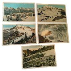 Five 1920s Rainier National Park Unused Numbered Postcards
