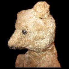 Sweet Antique Teddy bear
