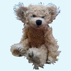 Adorable curly Teddy bear