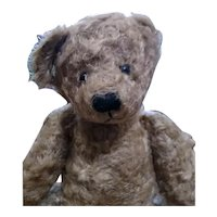 Adorable vintage Teddy by Mary Holstad