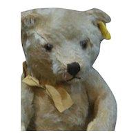 Adorable Steiff Teddy Bear