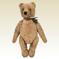 Steiff 50's Teddy Bear