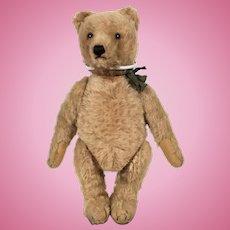Steiff Pre War Teddy Bear