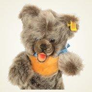 Small Steiff Zotti Teddy Bear