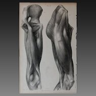 Antique 1836 English Anatomical Lithoghraph Print - Human Body / Muscles / Physiology Plate 35