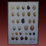 Vintage 1940s Danish Botanical SEED Chart -Ellen Backe School / Botany / Biology / Teaching Chart Print #1