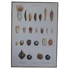Vintage 1940s Danish PRINT - Botanical SEED Chart -Ellen Backe School / Botany / Biology / Teaching Chart # 6