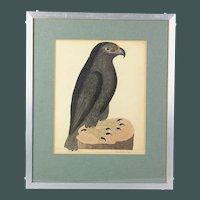 Superb Eleazar Albin copper plate print The Black Eagle hand colored