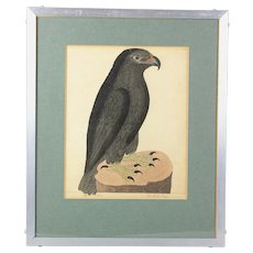 Superb Eleazar Albin copper plate print The Black Eagle hand colored