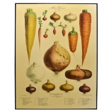 Mounted Reproduction Botanical Poster Kitchen Art Of Radishes Carrots Onions Resin Covered