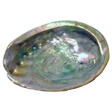 Mother Of Pearl Half Shell Large
