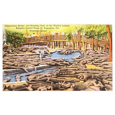 Linen Postcard - St Augustine Alligator and Ostrich Farm (circa 1940s)