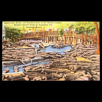 Linen Postcard - St Augustine Alligator and Ostrich Farm (circa 1940s)