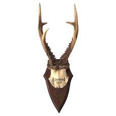 Antique Roe Deer Antler Mount - Black Forest Germany - Brannsfort