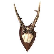 Antique Roe Deer Antler Mount - Konigstein Germany