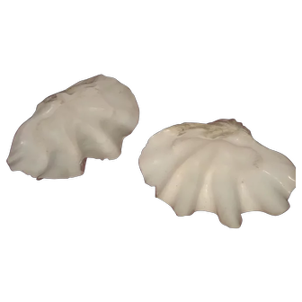 Tridacna Gigas Large Clam Shells