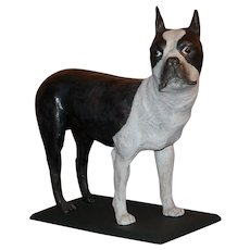 Lifelike Papier Mache Figure of a Boston Terrier Dog Circa 1920's