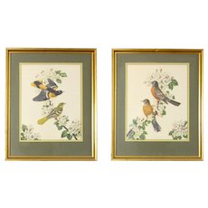 Framed Vintage James Gordon Irving Bird Illustrations - a Pair