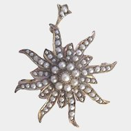 Antique 9K Gold Starburst Seed Pearl Brooch Pendant